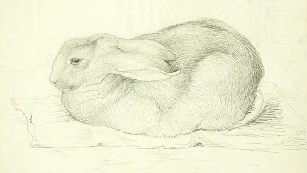 Beatrix Potter's study of her pet rabbit, 1898.This 'real' rabbit, called Peter Piper, was the namesake of the beloved fictional character. / NT 242725