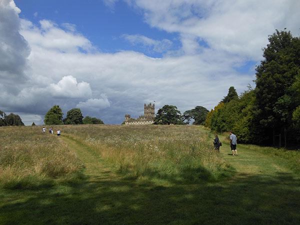View across the wild flower meadow