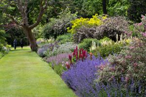 savill-garden-4935-june2015-andrew-soles