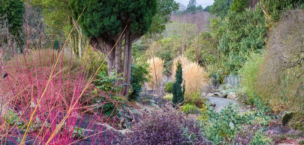 Bodnant Winter Garden © NT Images