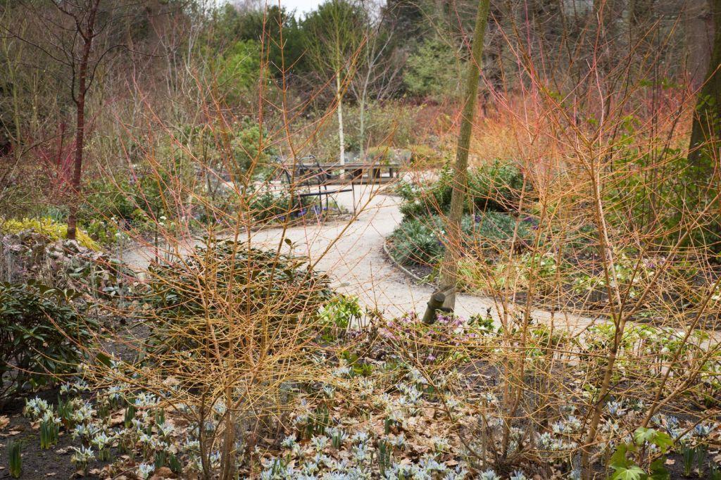 Dunham Massey winter garden National Trust