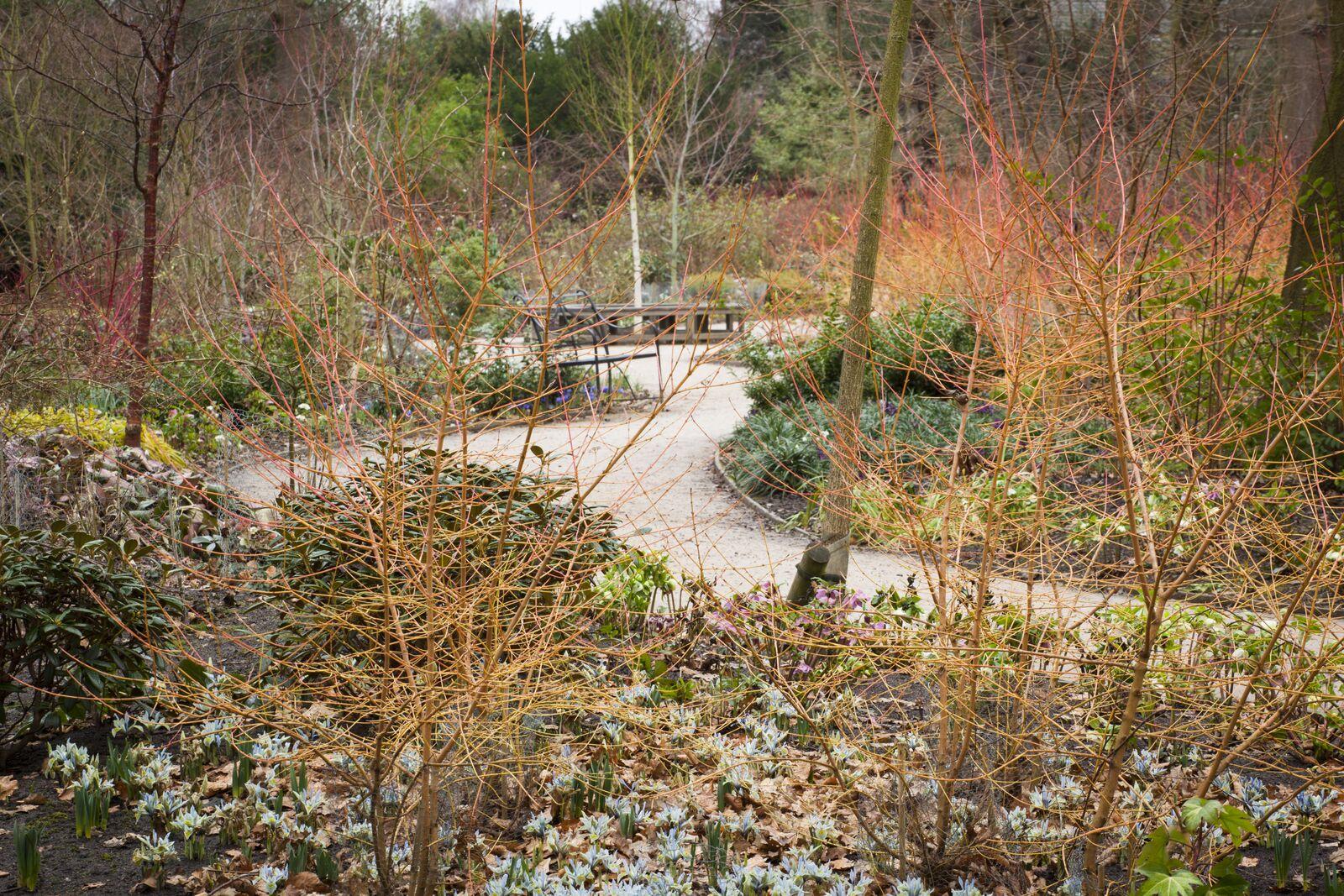 Find Your Own National Trust Winter Wonderland - The Royal Oak ...