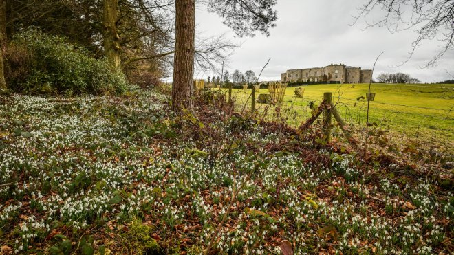 The snowdrop trail at Chirk Castle National Trust images