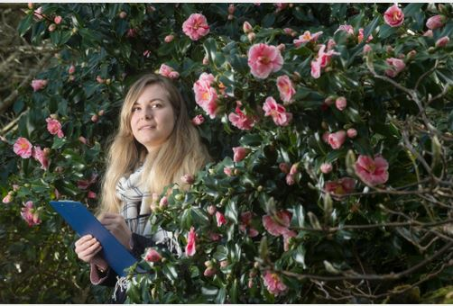 The 2017 Annual National Trust Valentines Day Flower Count at Greenway Hous,e the former home of Agatha Christie – Amy U'Ren amongst the camellias. Credit National Trust, Steven Haywood