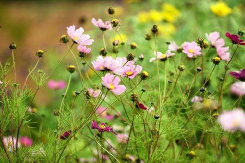Gibside Walled Garden in full bloom