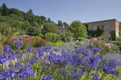 Killerton's garden, a canvas of colour in the Summer