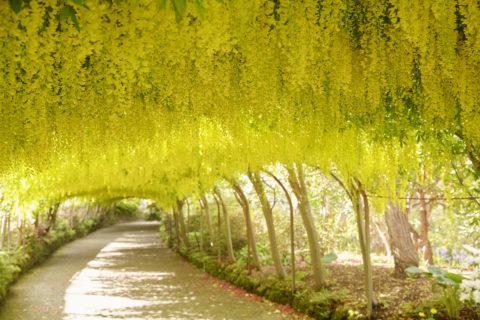 Bodnant Garden, Clwyd, Wales.