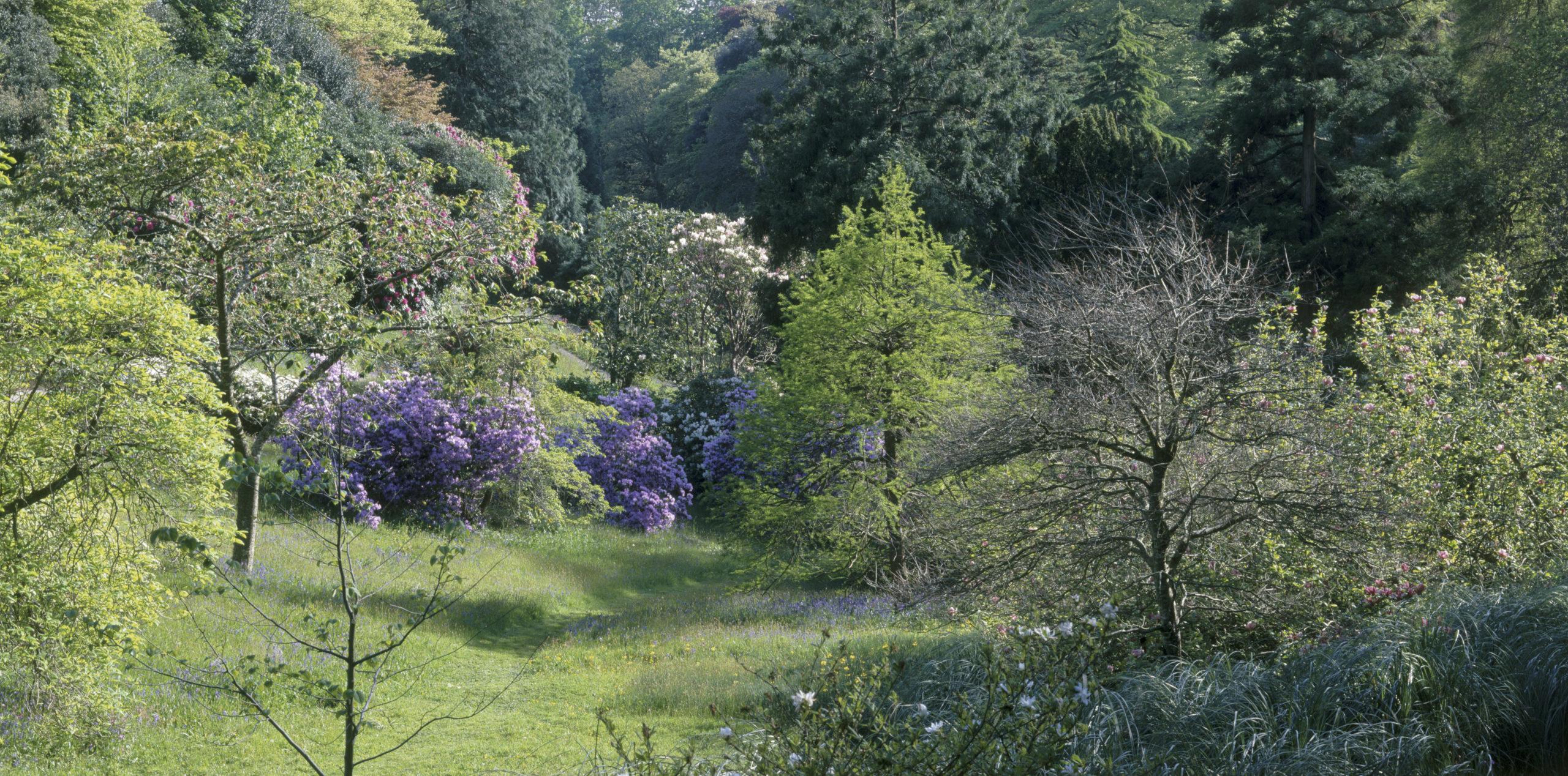 Early spring blossom at Glendurgan in Cornwall. © Hilary Daniel & NTI